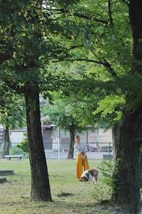 ちょこと散歩 - 美は観る者の眼の中にある