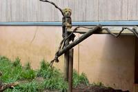 五つの毛玉(10:00~12:30) - 動物園へ行こう