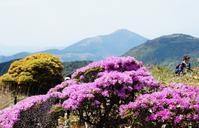 九重でミヤマキリシマを見る - いぐさん流 山と花の写真(富士山)