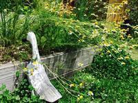 Kusaniwa  garden  0607 - Healing Garden  ー草庭ー