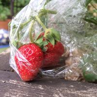 果実と野菜 - misaの庭暮らし~Abandon~