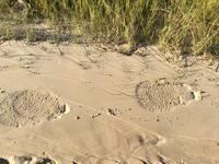 オカバンゴな日々 ②  水辺へ - 象を読む人 象を書く人