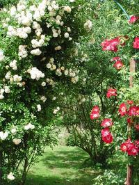 秘密の花園 - ベルギー 田舎季記