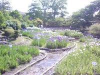 水月公園の菖蒲園を見に行ってきました。 - 時の流れに身を任せ…
