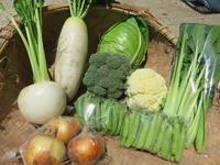 今週の野菜セット6月2週目 - まるみど農園のあれこれ日記