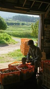ペースダウン - 山脇農園ブログ