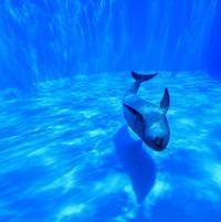 名古屋港水族館2 - 休日はタンデムツーリング