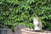 Happy Caturday♪ - paradise camera
