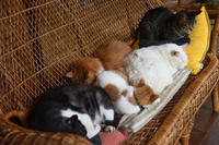 6月でも猫団子 - りきの毎日