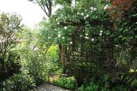 5月17日①緑の重なりが美しいバラの庭(望遠レンズで) - Reon with LR & Roses