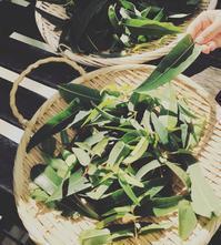 Mothers  Herb レモンユーカリの虫除けスプレーと日焼け止めクリームWSのお知らせ - itononiwa