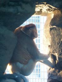 6月13日(火)気遣い - ほのぼの動物写真日記