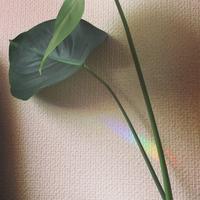 モンステラ日記4 - aloha healing Makanoe