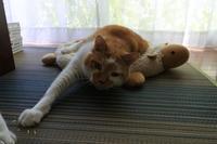 マーくん特集 - 「両手のない猫」チビタと愉快な仲間たち