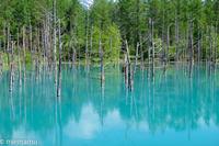 青い池からVol.3~6月の美瑛 - My favorite ~Diary 3~