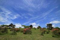 高原の風と雲 - 風の彩り-2