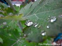 梅雨らしい雨にいそいそ散歩へ - 丁寧な生活をゆっくりと2