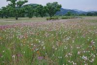 安倍川緑地公園 - 山の花、町の花