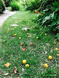 梅雨の晴れ間に - Healing Garden  ー草庭ー