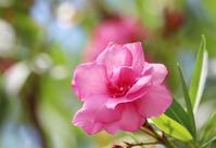ヒロシマの花 - 丹馬のきょうの1枚