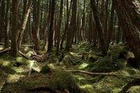 物の怪の森 - 風の彩り-2