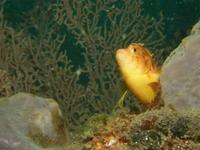 2011.10 伊豆山 The 2nd Dive - ランゲルハンス島の海