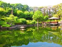 目白庭園 - 東京いけばな日記 花と暮らしと生活と