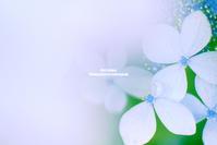 hydrangea - Next Colors