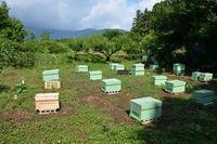 西洋ミツバチ販売 - 八風農園 雅 鈴鹿連峰の御在所岳の麓で自然食品を製造販売してる農園です!