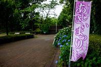 曇り空の紫陽花 - TOSが行く~徒然なるままの撮影記録~