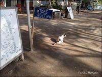 #旅のお守り&初渡話 / 逃避行録 2016 - #14:Gili Air@お宿猫・メメちゃん編 Up! - 他力本願!