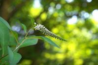 四季の森公園の花々No2 - N.Eの玉手箱