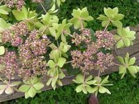 アジサイ展から4種と不明のお花3種 - 花追い日記