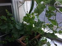 全貌、メロン、きゅうり - 3F garden(屋根付屋外水耕)