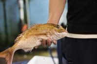 #24 別所水産へにぎり寿司のネタを仕入れに⭐︎ - チッキィのおいしい淡路島