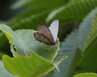 最近の活動と月刊むし記事案内 - 蝶鳥ウォッチング