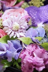 その名はジョセフィーヌ、美しい!! - お花に囲まれて