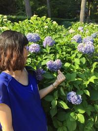 本日の三室戸寺 ハートマークあじさい - 【飴屋通信】 京都の飴工房「岩井製菓」のブログ