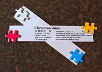 染色体 。 - よかりよ計画
