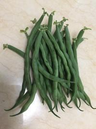 初収穫インゲンと、シソジュース - チェロママ日記