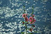 四季の森公園の花々No4 - N.Eの玉手箱