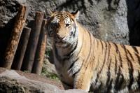 【旭山動物園(3)】北海道旅行 - 9 - - うろ子とカメラ。