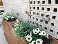 今月の花 - Healing Garden  ー草庭ー