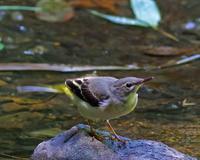2017年6月野鳥 - マルパパ釣行記