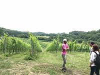 アズッカ エ アズッコ - WineShop FUJIMARU