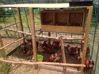 産卵箱で産んでくれた♪ - にじまる食堂 & にじまる農園