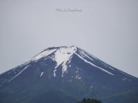 富士山に鶴 - 世の中そんなに甘くない!                                            (落ちもないけど)