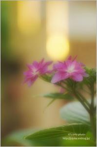 '17 紫陽花*Ⅲ - It's only photo