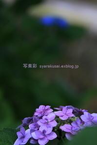 哲学の道に行く7 - 写楽彩