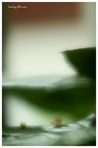 *天狗の団扇* - 心写心癒  ~心の鏡~